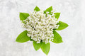 Lily of the valley bouquet on a concrete texture Royalty Free Stock Photo