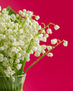 Lily of the valley bouquet on light background Royalty Free Stock Photos
