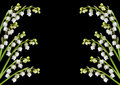 Lily of the valley flower background Stock Photography