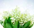 Lily valley flower design bunch white spring flowers Royalty Free Stock Images