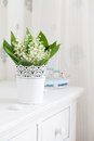 Lily of the valley in flower pot isolated on white background Stock Photos