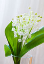 Lily of the valley flowers Stock Image