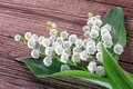 Lily of the valley flowers design Royalty Free Stock Photography
