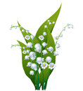Lily of the valley isolated on white Royalty Free Stock Photos