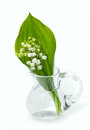Lily of the valley isolated on white Royalty Free Stock Photo