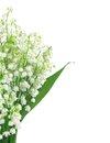 Lily of the valley isolated on white Royalty Free Stock Photography
