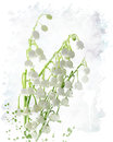 Lily of the valley watercolor Images libres de droits