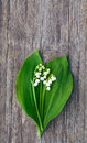 Lily of the valley on wooden surface Stock Photos