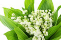 Lily of the Vally Royalty Free Stock Photo