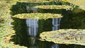 Lilypond Stock Images