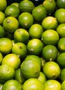 Lime citrus fruit a display of limes on a supermarket shelf Royalty Free Stock Images