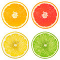 Lime, orange, grapefruit and lemon Stock Images