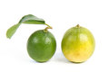 Lime with section on a white Royalty Free Stock Photography