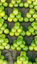 Limes at the farmer's market Stock Photo