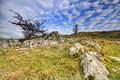 Limestone Pavement in the yorkshire dales Royalty Free Stock Photo
