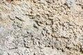 Limestone Wall Of Textura