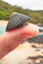Limpet On A Thumb