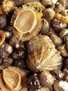 Limpets and periwinkles Royalty Free Stock Image
