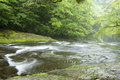 Limpid stream flowing over the gentle slope in green forest Royalty Free Stock Photo