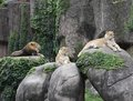 Lincoln Park Zoo Pride Royalty Free Stock Photo
