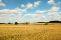 Lincolnshire wheat field a of in the heart of engalnd uk Stock Image