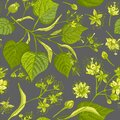 Linden blossom hand drawn seamless pattern with flower, lives and branch in yellow and green colors on gray background Royalty Free Stock Photo