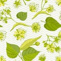 Linden blossom hand drawn seamless pattern with flower, lives and branch in yellow and green colors on white background Royalty Free Stock Photo
