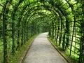 Linden pergola tunnel Royalty Free Stock Photo