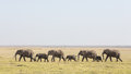 A line of african elephants walking through amboseli in kenya national park Stock Photography