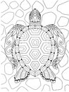 Line art of beautiful turtle for design element. Vector illustration Royalty Free Stock Photo