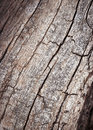 Line fissures to dry branch Royalty Free Stock Photo