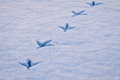 Line of footprints in snow Royalty Free Stock Photo
