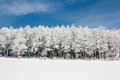Line of Frozen trees Stock Image