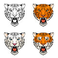 Line illustration of a roaring tiger head in various color combinations Royalty Free Stock Photography