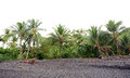 Line of palm trees in tropical rainforest panama Stock Photos