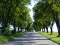 Line path between trees many trees Royalty Free Stock Photography