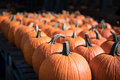 Line of Pumpkins at Farmers Market Royalty Free Stock Photo