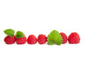 Line of raspberries with leaves Royalty Free Stock Photo