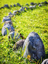 Line of rocks at a meadow Stock Photography