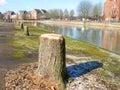 Tree stumps. Royalty Free Stock Photo