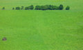 Line of trees on a green field top view Stock Photography
