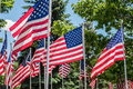 Line Of US Flags Outside In Th...