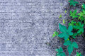 Lined background with green leaves Royalty Free Stock Photo