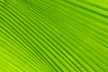 Lines abstract image of green palm leaves thailand Stock Images