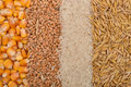 Lines of beans of dried corn, oats, rice and wheat lying on jute Royalty Free Stock Photo