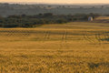 Lines on cereals and dehesa landscape holms oaks green wheat fields spain Stock Photography