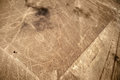 Lines and geoglyphs of nazca unesco heritage peru sea bird Royalty Free Stock Photo