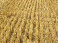 Lines in the hay Royalty Free Stock Photo