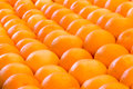Lines of many oranges in rows Royalty Free Stock Photo