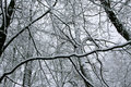 The lines of the snow forest Stock Photography